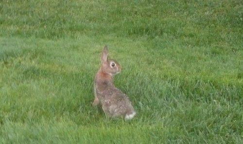 A Wabbit! I saw a Wabbit!